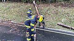 T1 FF Holzschlag